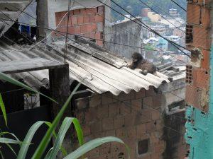 Brazil Favela Life in Rio de Janeiro