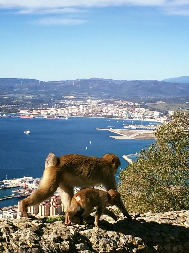 Gibraltar Day Trip